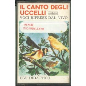 Il Canto Degli Uccelli MC7 Merlo Incardellato / CA 4502 Nuova